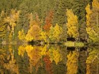 Elbingstalteich Herbstspiegelung