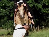 Fotoshooting mit Model und Pferd