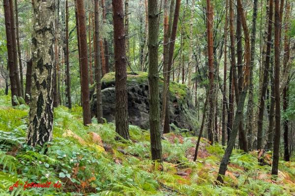 Wald mit Farn bedeckt
