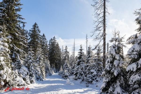 Fotoworkshop Fotokurs Fotowanderung Nationalpar Harz