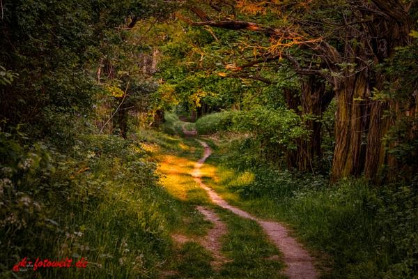 Wanderweg im Sonnenuntergang Lichtstimmung