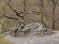Harzer Hexen-Stieg / Bodetal-Stieg zwischen Treseburg und Thale