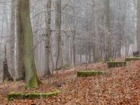 Haus im nebligen Wald stehend