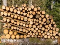 Nachwachsender Rohstoff Holz