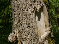 alter Baum Rinde / Borke