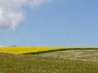 blühende Wiesen und Landschaften