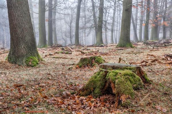 Harzer Wald Nebelstimmung