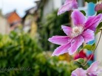fotografischer Streifzug Bilder aus Quedlinburg Daniel Kühne-43