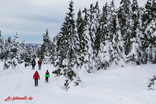 Nationalpark Harz Blick vom Brockenplateau