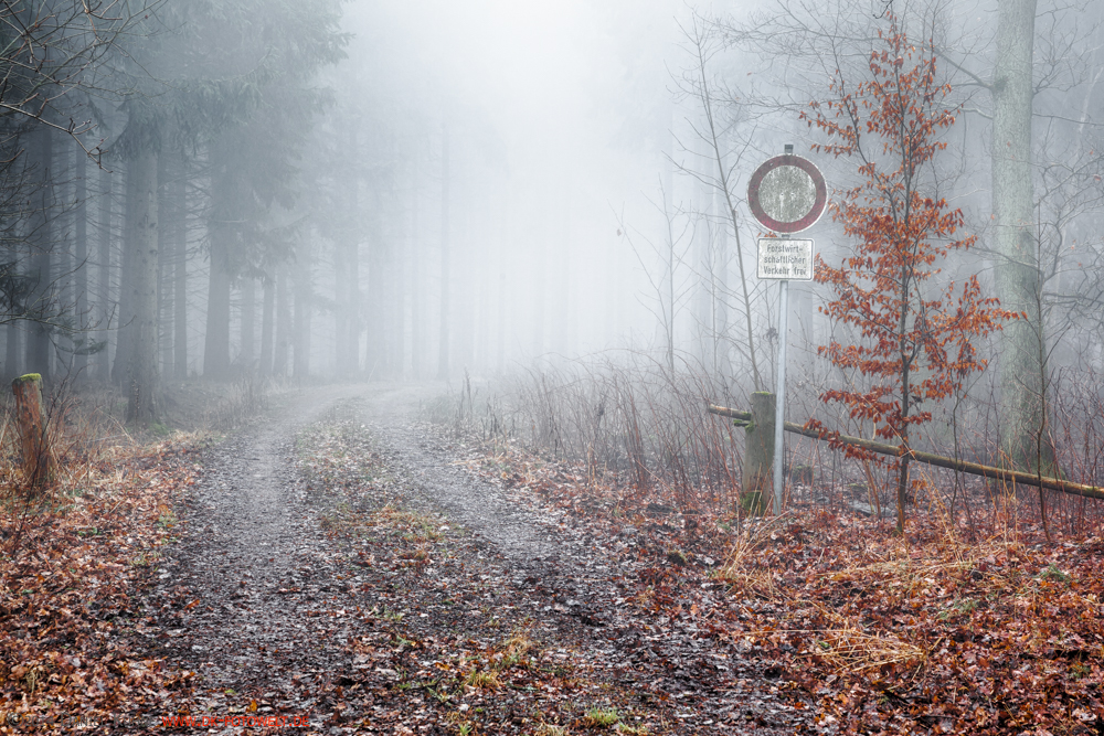 Nebelstimmungen im Harz