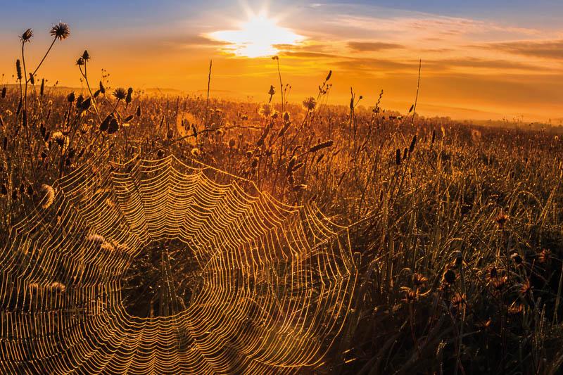 Spinnennetz im Morgenlicht Selketal Fotoausstellung Museumshof Meisdorf