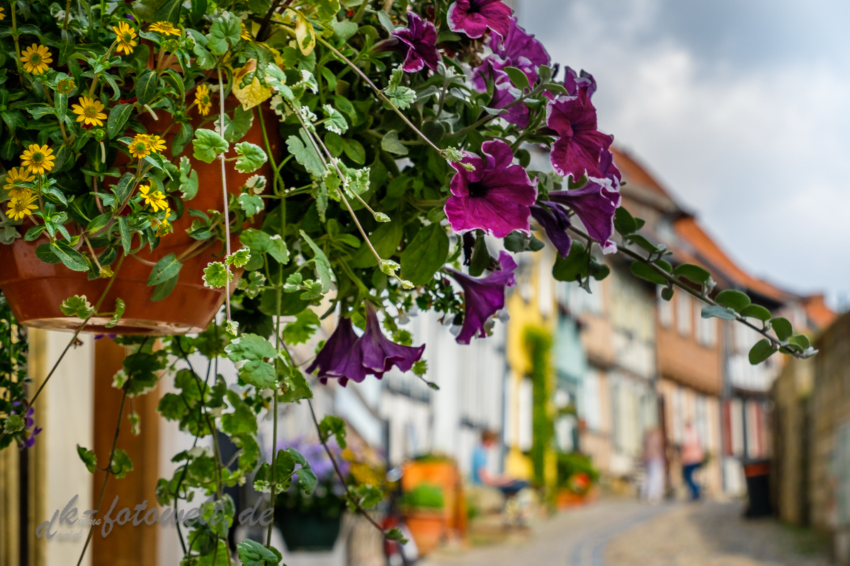 fotografischer Streifzug Bilder aus Quedlinburg Daniel Kühne-13
